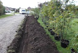 Instant Hedge Planting