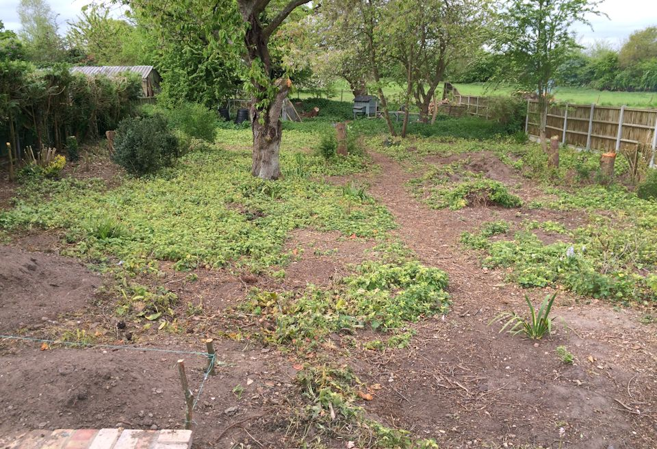 Garden Clearance and Lawn Swannington, Norfolk - Overgrown Site