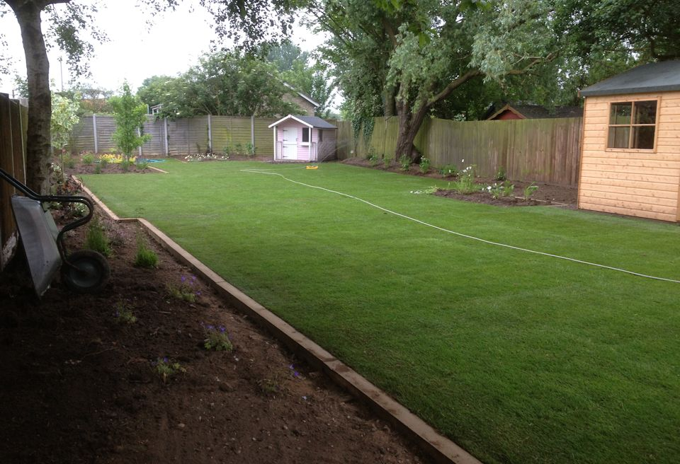 Garden Design Gorleston, Norfolk - New Lawn and Borders with Feature Planting